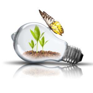 Eignen sich Tageslichtlampen für die Pflanzenbeleuchtung?